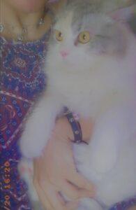 Mona Alshaiifani